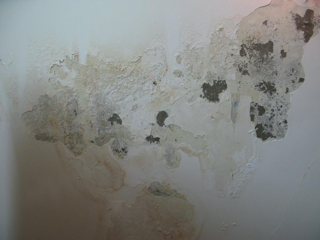 Dấu Hiệu Cho Thấy Tường Nhà Bạn đã Bị Thấm Nước